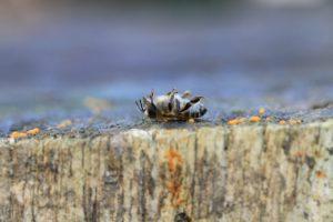 bee-dead
