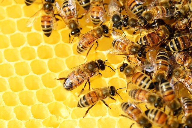 bees-326337_640