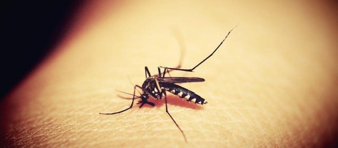 mosquitoe-1548975_640